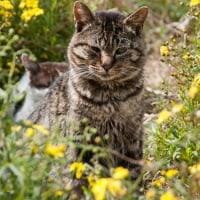ネコの日向ぼっこ~春の陽気に誘われて♪