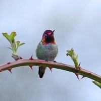 バンクーバーの鳥ハイライト