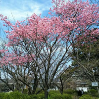 京都府立植物園で花見と鳥見