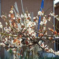 春分の日春うらら琵琶湖岸をぶらり