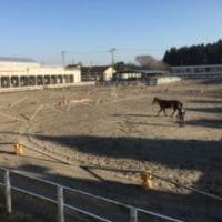 馬の仕事につくために アニベジ奮闘記 エピソード218