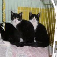 3匹の子ネコ、その後のその後・・・