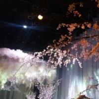 日本で一番早いお花見へ