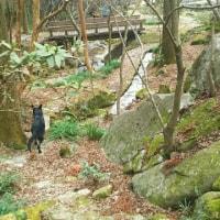 冬の環境芸術の森