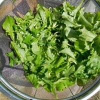 野菜作り(25)色々な野菜ドラマに乾杯
