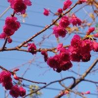 庭の花と、昨日のキノコの続きと懐中時計スタンドとか?