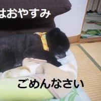 いつでもおやすみ