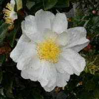廻るもの 冬の花
