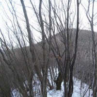 安蘇の尾根つなぎに、みー猫さんに付き合ってもらいました。  秋葉山/ 523P/ 572P/ 名草巨石群南西のピーク群