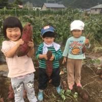 みんなでサツマイモ収穫🍠