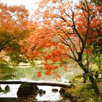 六義園の紅葉 5