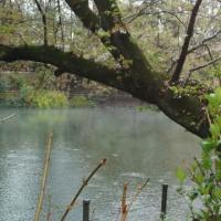 朝の井の頭池