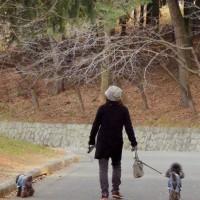 春のような暖かさに誘われ大泉緑地へ 6 (大阪府堺市)