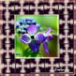 紫陽花写真アニメーション ジェイトリム枠