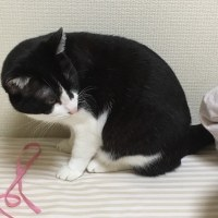 5/28(日)大阪シティ:インテックス参加です〜!