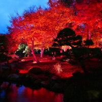 由志園の紅葉のライトアップの動画
