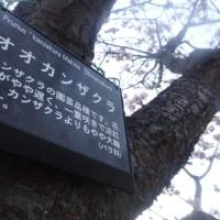 桜が咲いて~散歩をして~ウキウキ気分・・・
