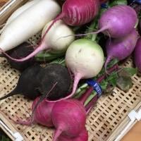 明日のお野菜
