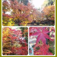 井出の宝福寺の紅葉