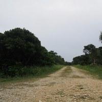 のんびり沖縄