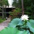 曹源寺の蓮の花 3 in 岡山市