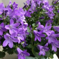 紫の花と「命より大切なもの」~理想の先へと「飛翔」する羽生選手へのエール