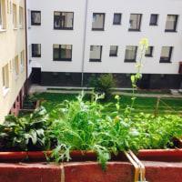 家庭菜園で収穫