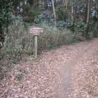 水戸のプチ林野歩き