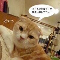 福猫茶房さん:3月24日