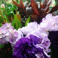紫・・・好き