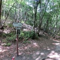 仙ヶ岳と宮指路岳を周回