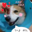 2017 7/27★今日はライム君です~(^u^)