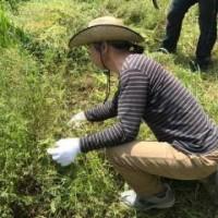 鎌研ぎ&草刈りワークショップ 報告
