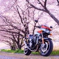 【-Sakura-】