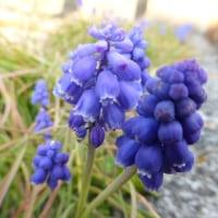 本日は忙しかった。思わず、庭に出て小さな花に語る。