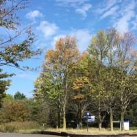 秋の日のためいき
