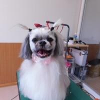シュシュちゃん・バロンくん・ミミちゃん♡