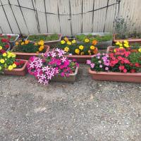 園内の花は