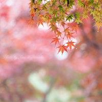 雨の彩り3:岡山後楽園