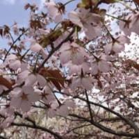春ですネ♡
