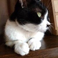 自宅警備員の兄猫