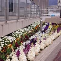 呉市役所と花