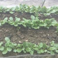 種蒔きタイミングとその後の管理