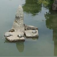 亀さんの甲羅干し(豊姫神社)
