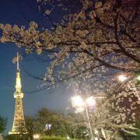 1897. 夜桜
