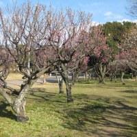 服部緑地公園の円形花壇