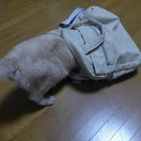 昨晩~今夕の ネコ
