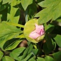 4.25庭の花