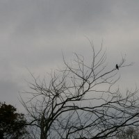 枝に一羽の鳥