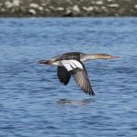 河口で飛ぶ